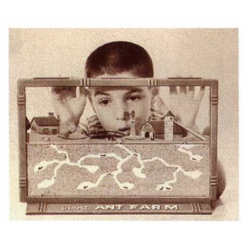 55305-uncle-milton-giant-ant-farm7